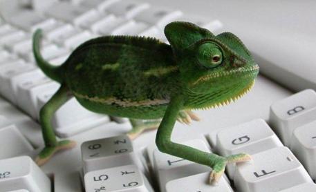 Adaptez votre site comme un caméléon grâce au responsive design