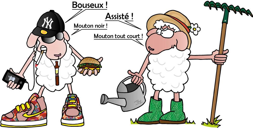 Mouton noir et mouton blanc