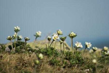 fleurs qui poussent
